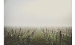 Французы подсчитывает ущерб от апрельских заморозков, повредивших виноградники